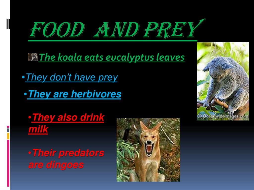 Food  and Prey