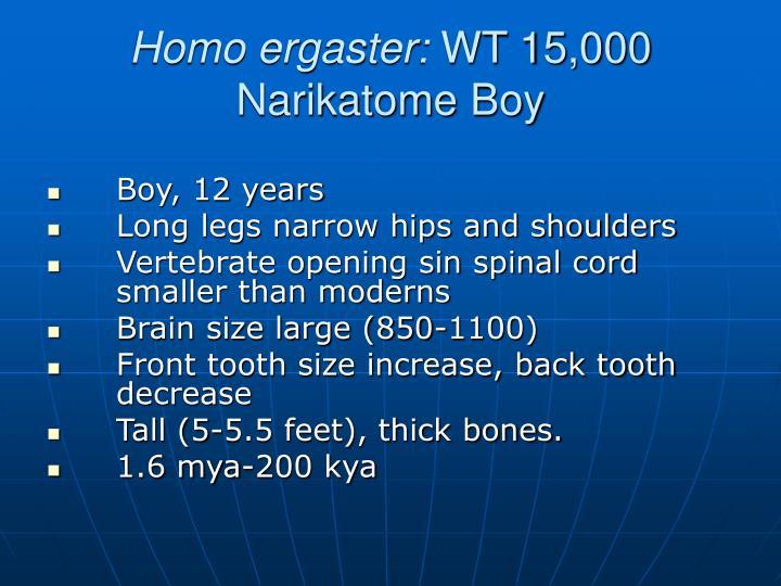 Homo ergaster: