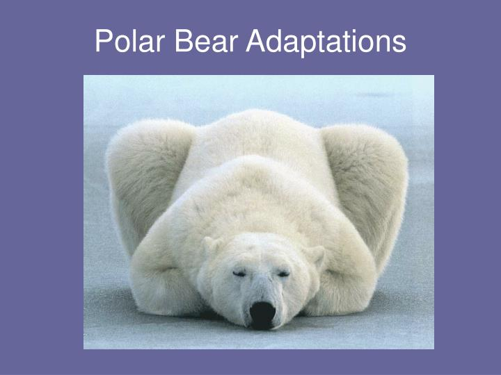 an analysis of the environmental adaptation of polar bears A new analysis has found that although the risk of persistent organic pollutants (pops) in the arctic environment is low for seals, it is two orders of magnitude higher than the safety.