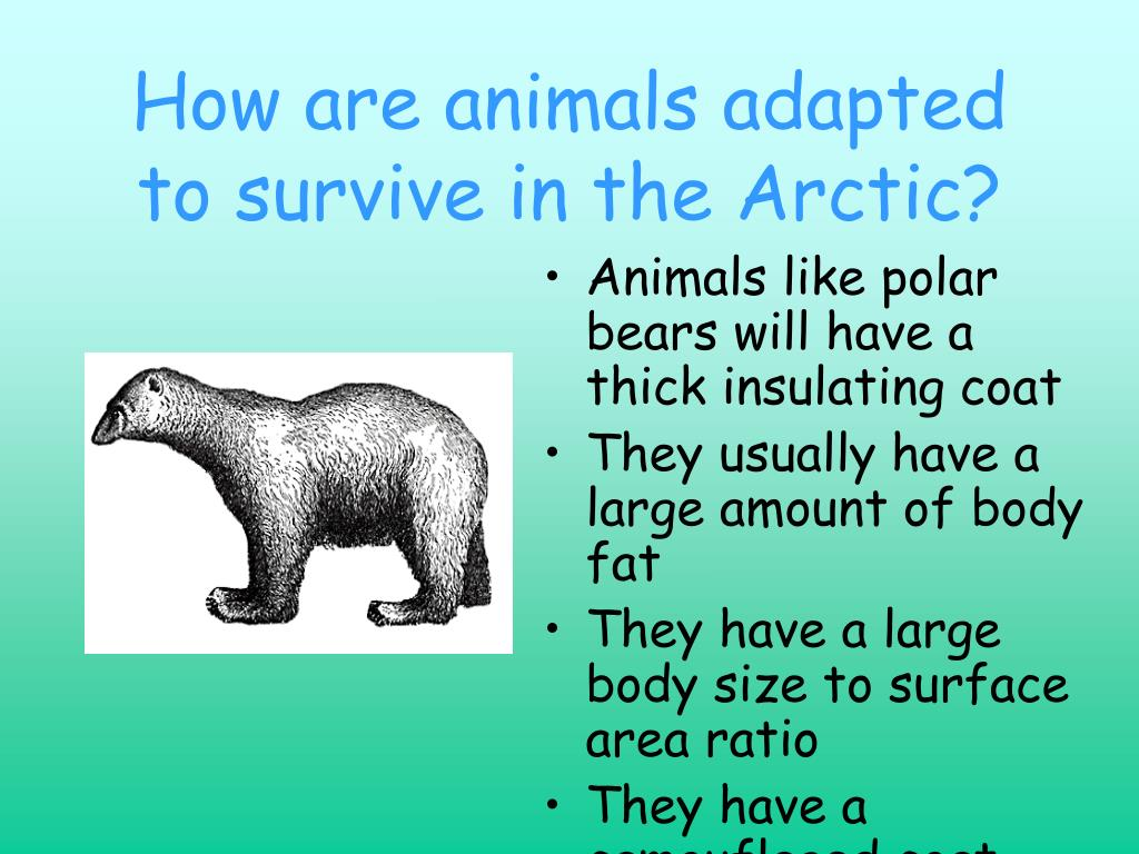 How are animals adapted to survive in the Arctic?