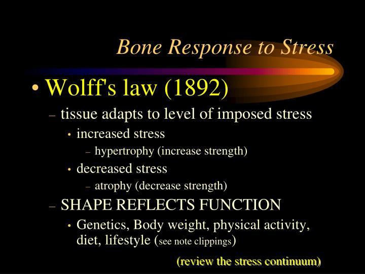 Bone Response to Stress