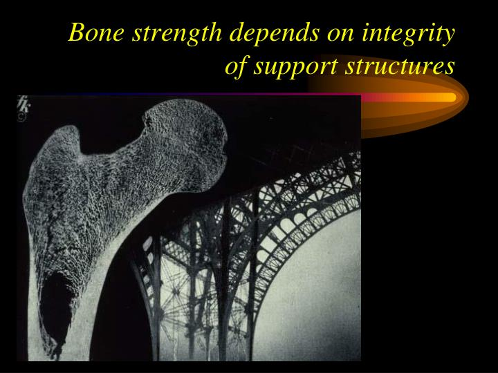 Bone strength depends on integrity of support structures