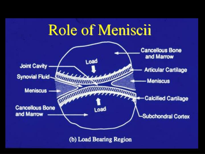 Role of Meniscii