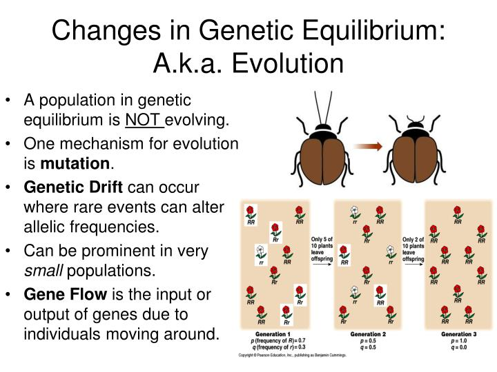 Changes in Genetic Equilibrium:  A.k.a. Evolution