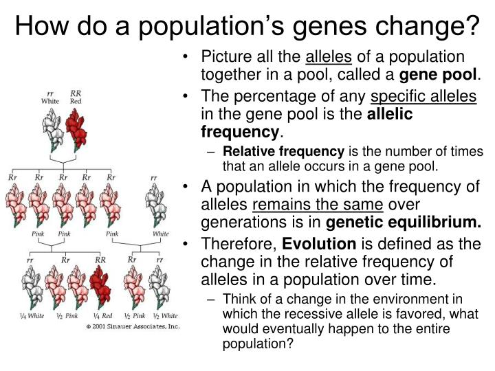 How do a population's genes change?