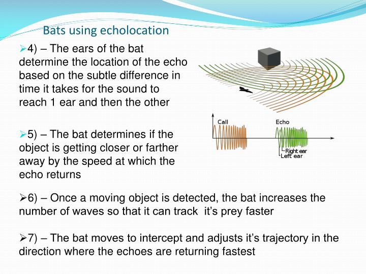 Bats using echolocation