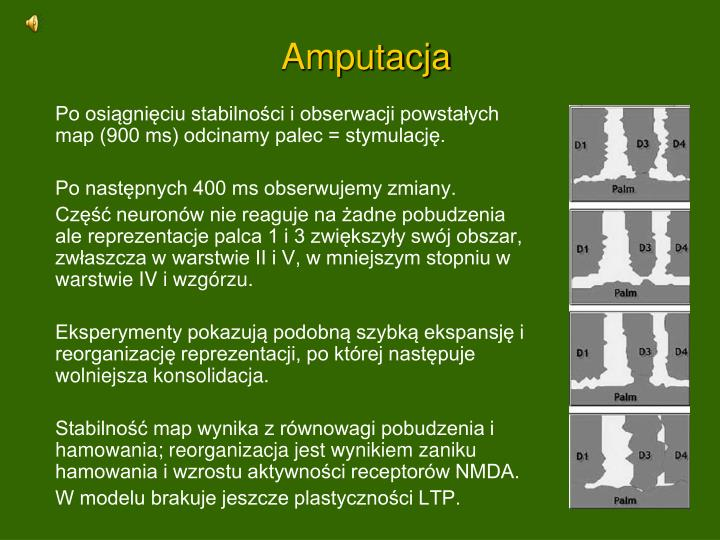 Amputacja