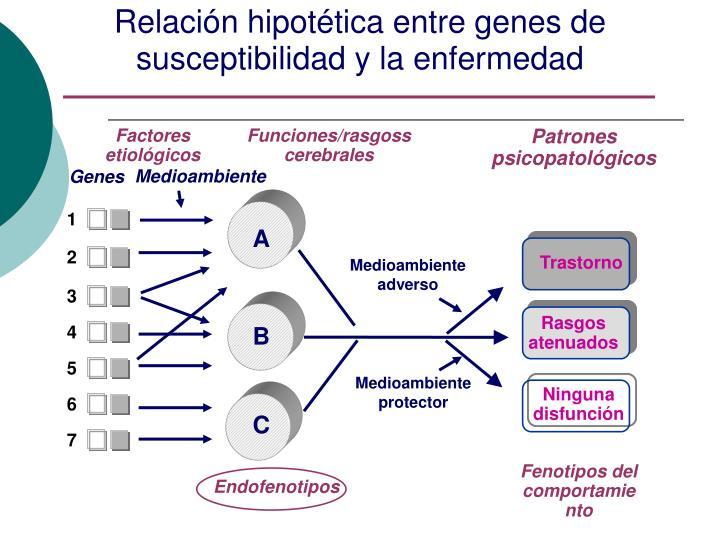 Relación hipotética entre genes de susceptibilidad y la enfermedad