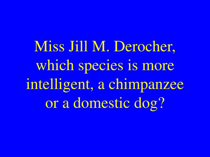 Miss Jill M. Derocher, which species is more intelligent, a chimpanzee or a domestic dog?