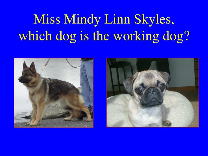 Miss Mindy Linn Skyles, which dog is the working dog?
