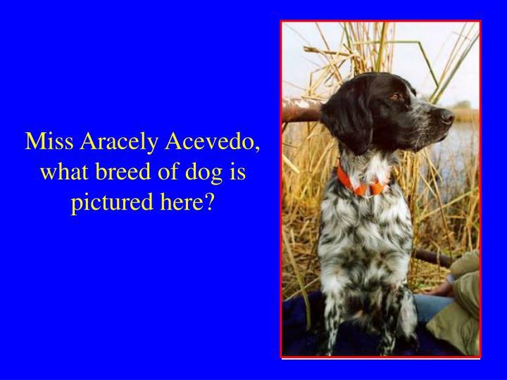 Miss Aracely Acevedo,