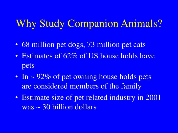 Why Study Companion Animals?