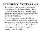 menstruation menstrual cycle