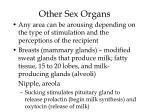 other sex organs