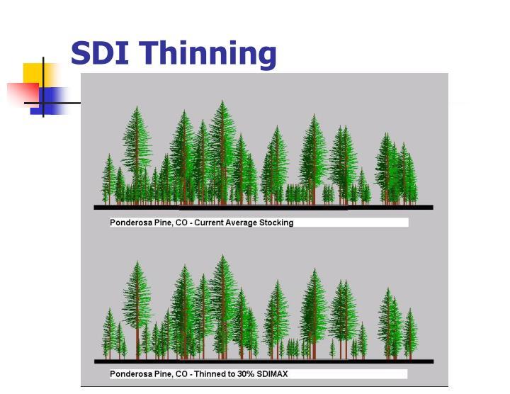 SDI Thinning