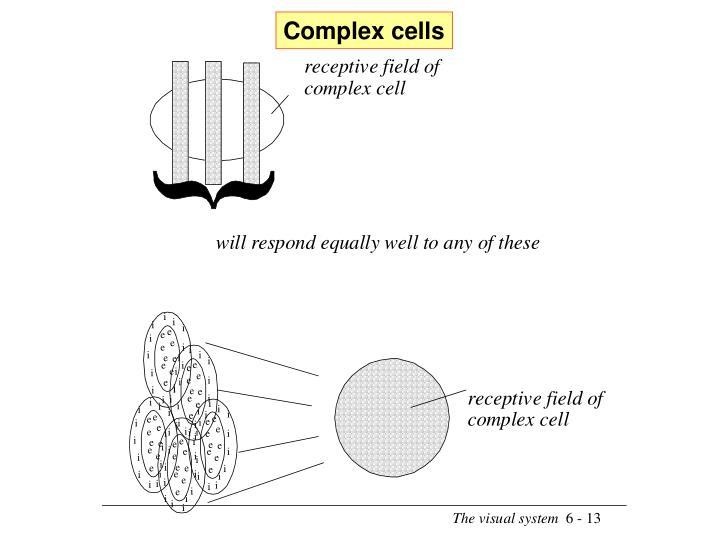 Complex cells