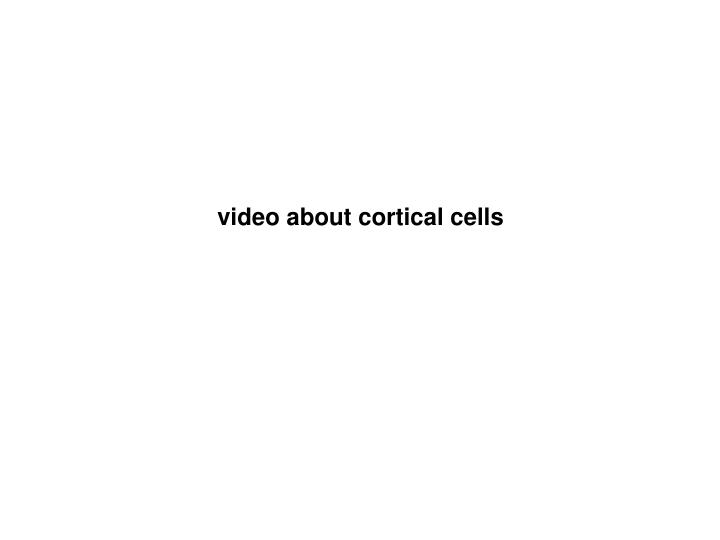 video about cortical cells