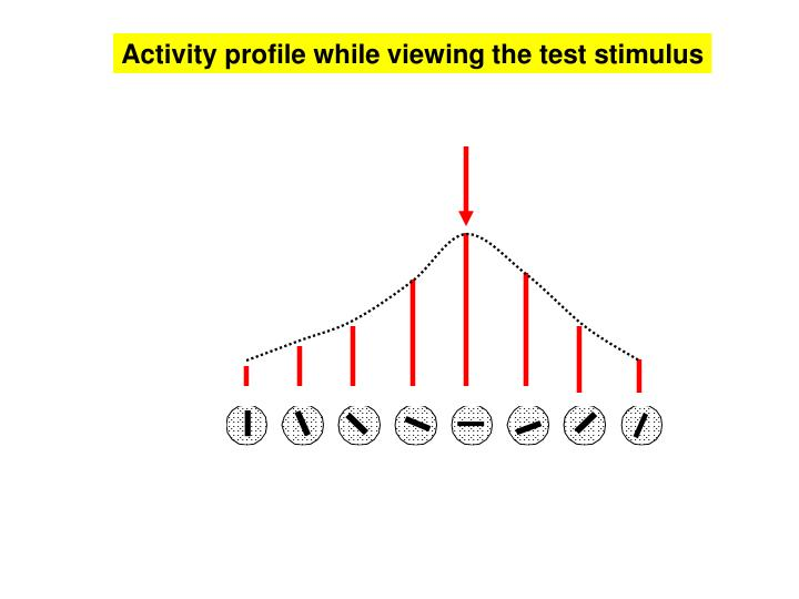 Activity profile while viewing the test stimulus