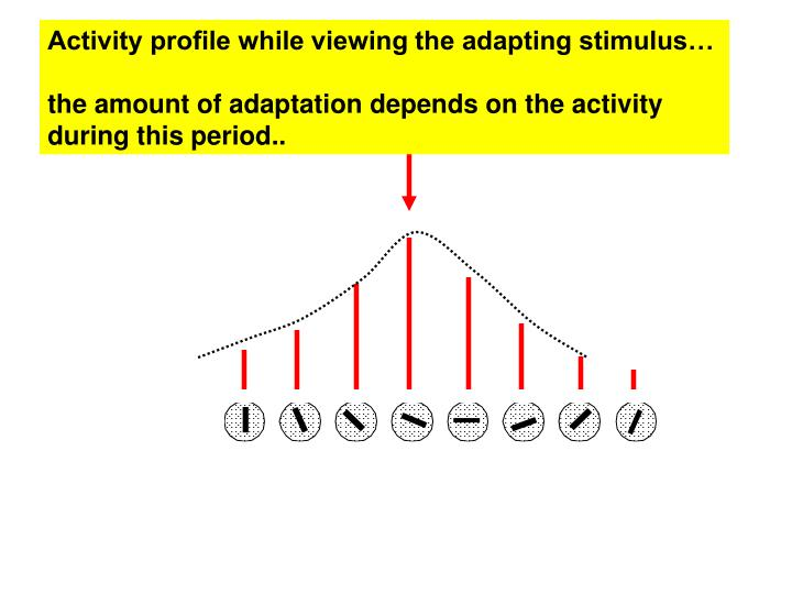 Activity profile while viewing the adapting stimulus…