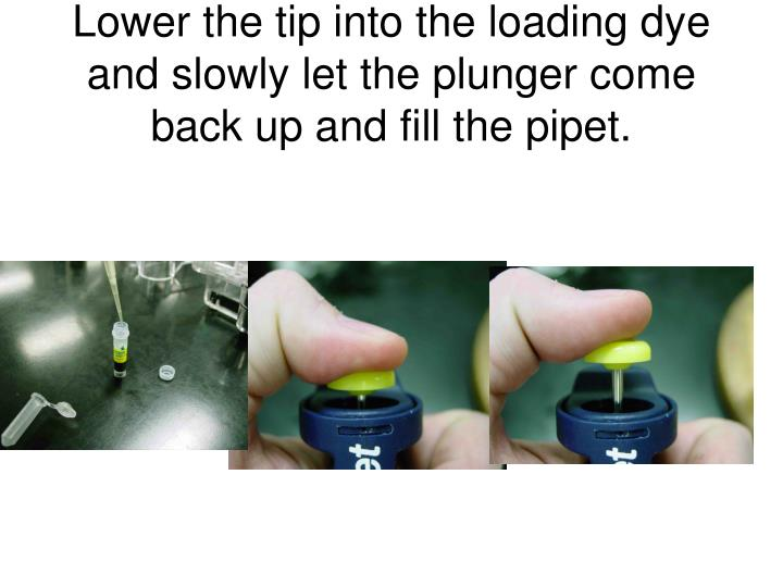 Lower the tip into the loading dye and slowly let the plunger come back up and fill the pipet.