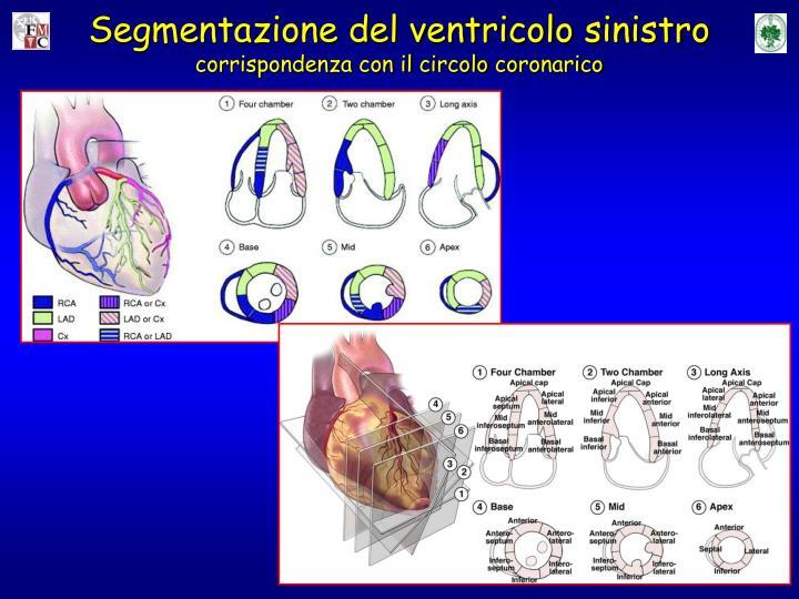Segmentazione del ventricolo sinistro