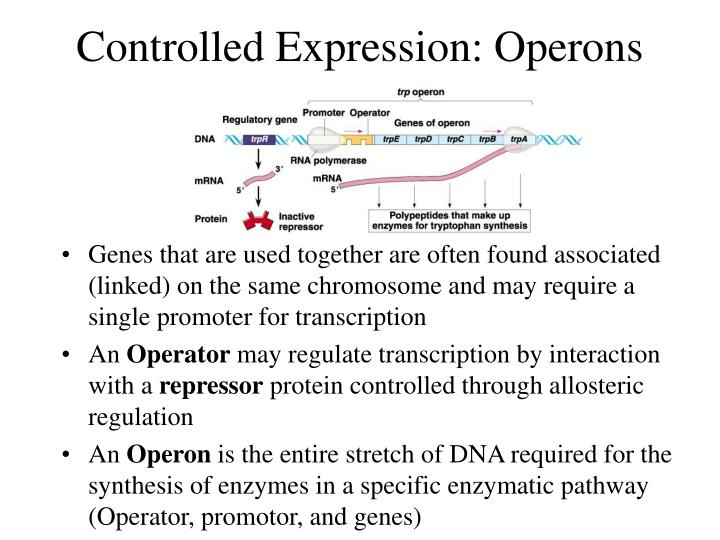 Controlled Expression: Operons