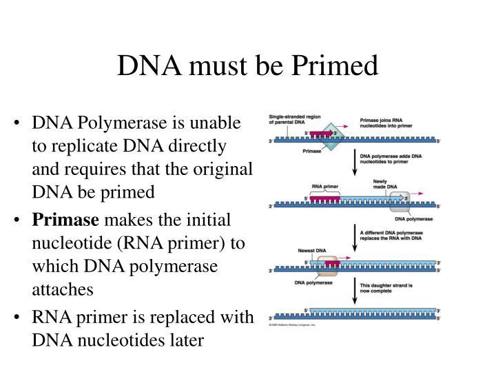 DNA must be Primed