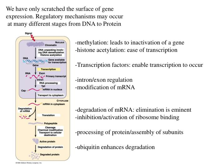We have only scratched the surface of gene