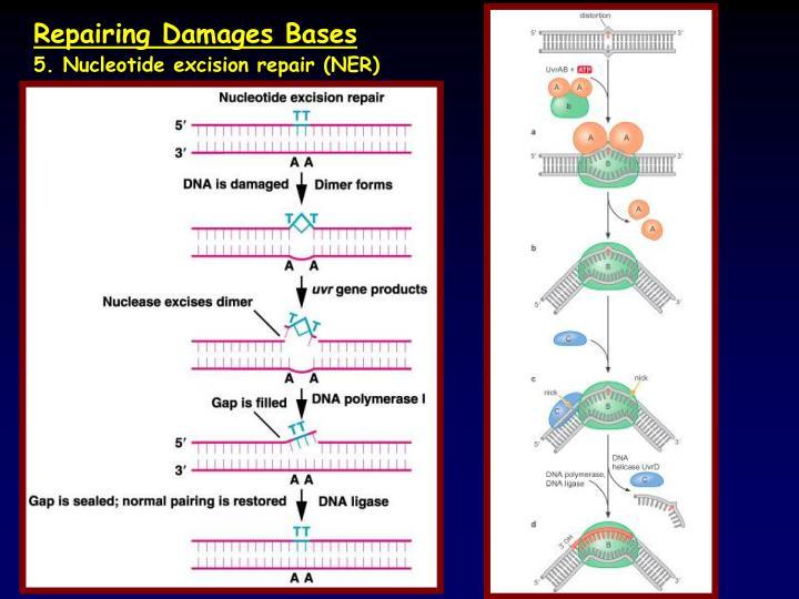 Repairing Damages Bases