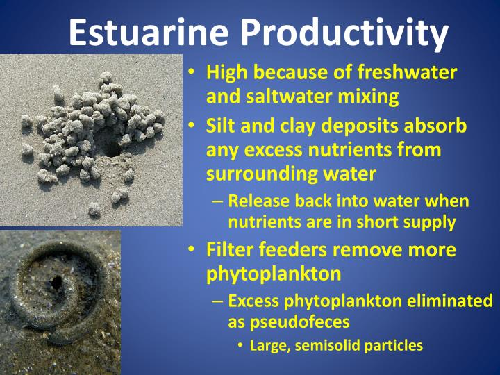 Estuarine Productivity