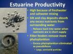 estuarine productivity