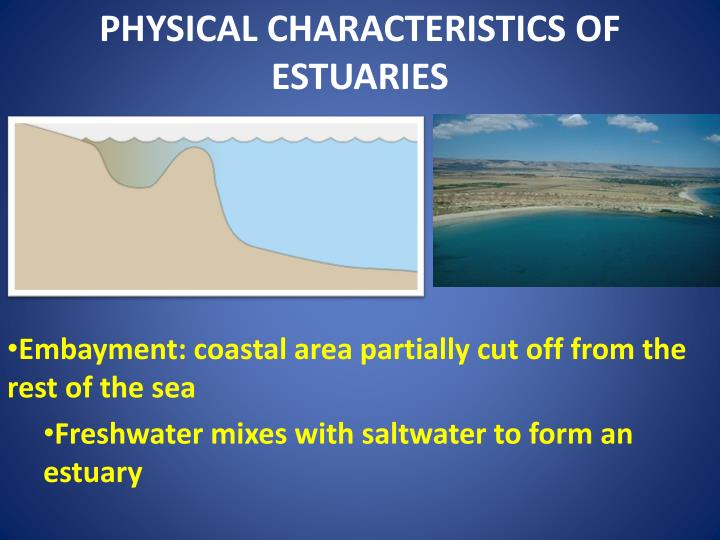 Physical characteristics of estuaries
