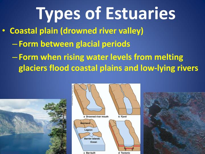 Types of Estuaries