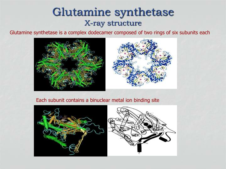 Glutamine synthetase