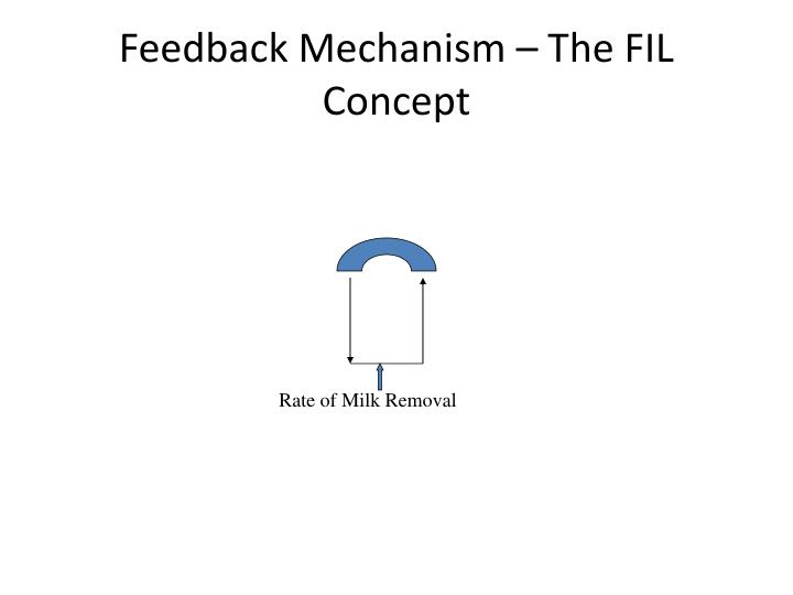 Feedback Mechanism – The FIL Concept