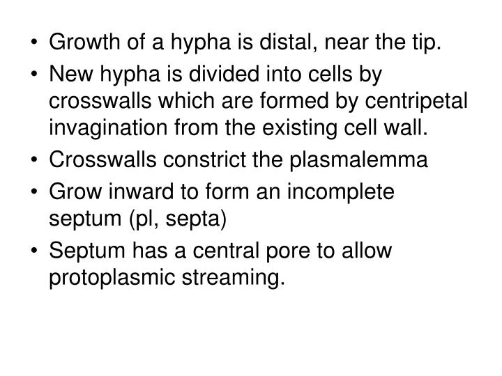 Growth of a hypha is distal, near the tip.