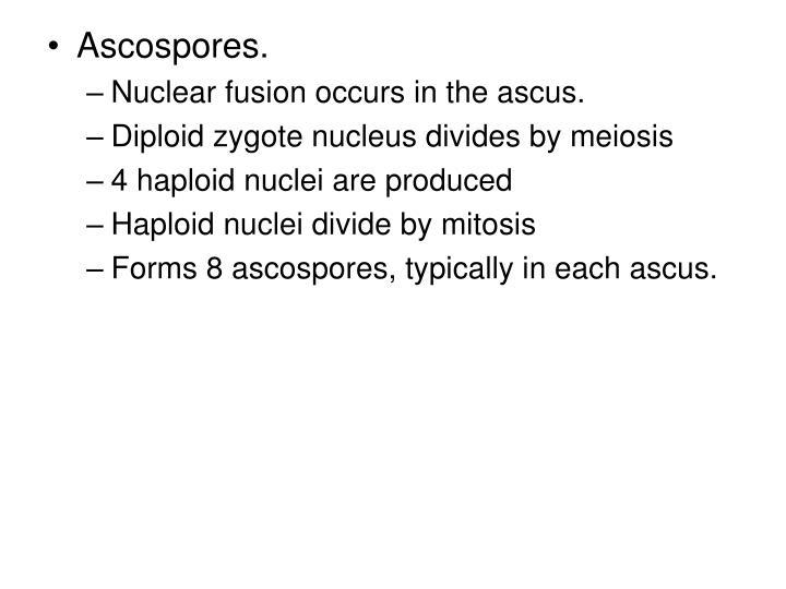 Ascospores.