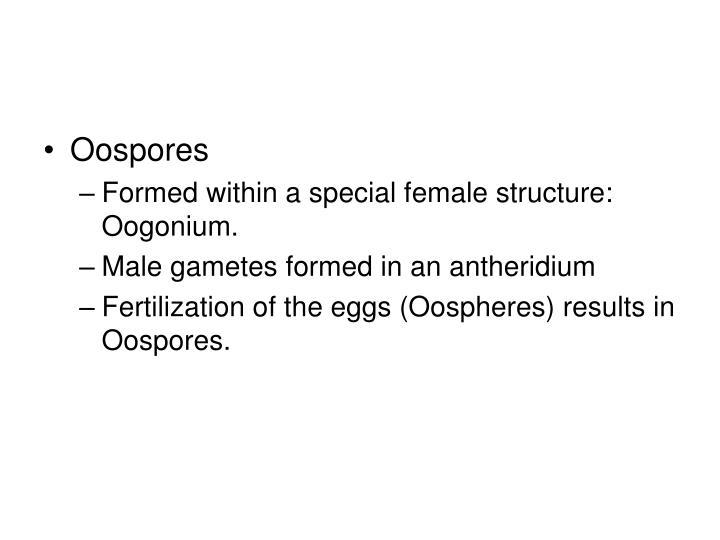 Oospores