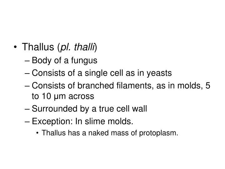 Thallus (