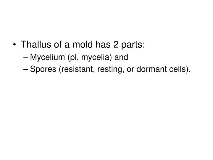 Thallus of a mold has 2 parts: