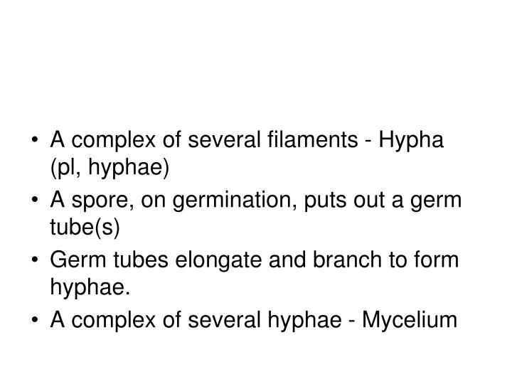 A complex of several filaments - Hypha (pl, hyphae)