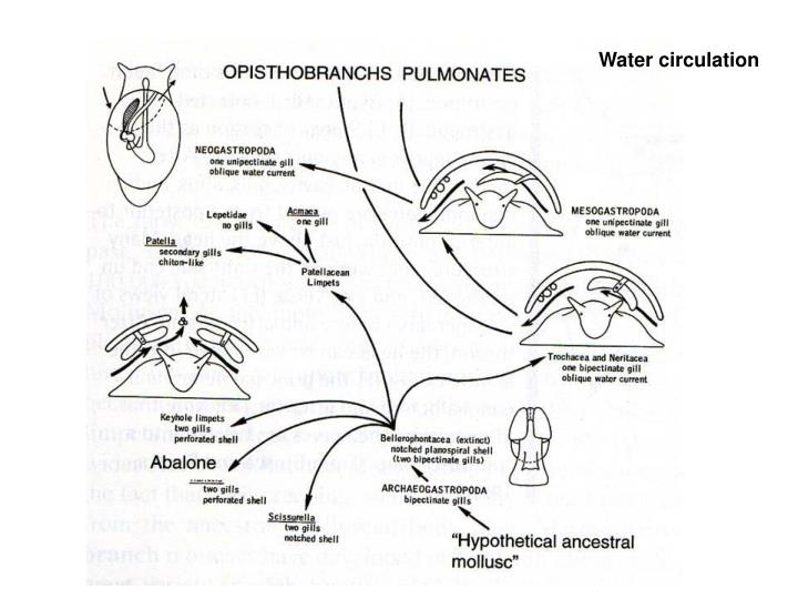 Water circulation