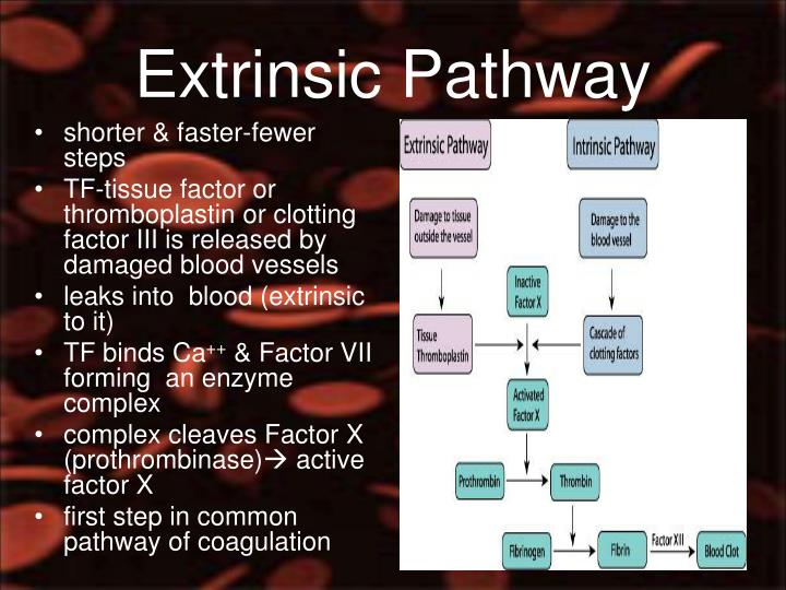 Extrinsic Pathway