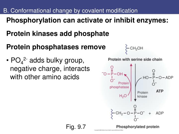B. Conformational change by covalent modification