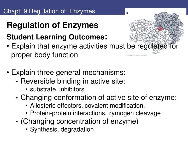Chapt 9 regulation of enzymes