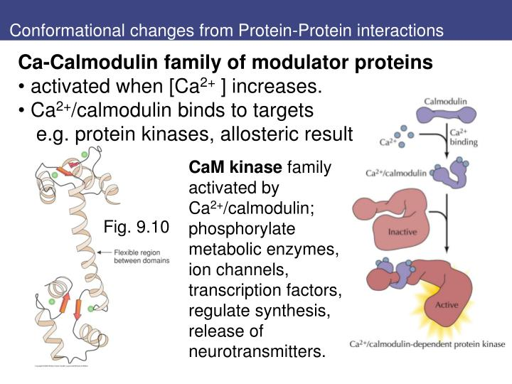 Conformational changes from Protein-Protein interactions