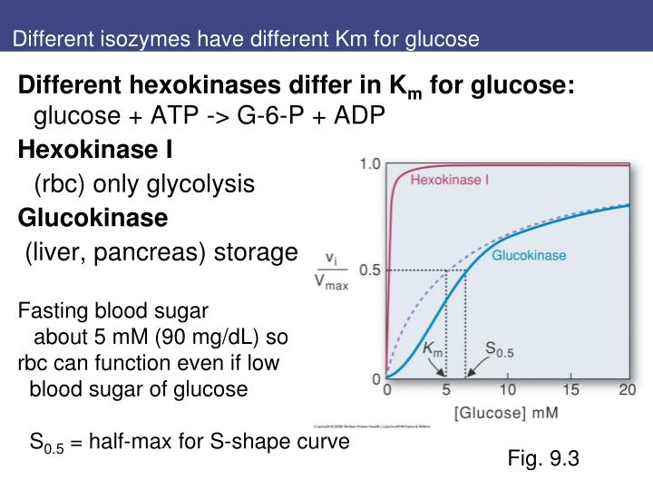 Different isozymes have different Km for glucose