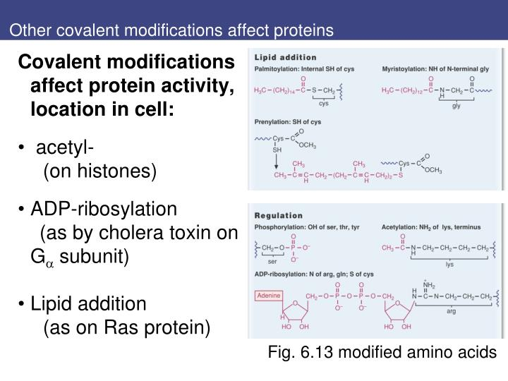 Other covalent modifications affect proteins