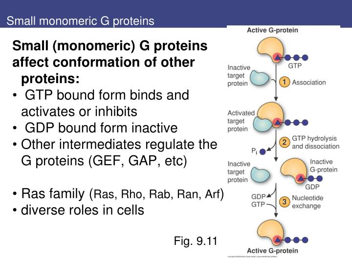 Small monomeric G proteins