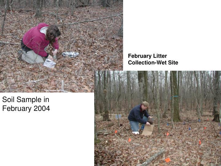 February Litter